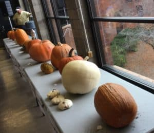 variety of pumpkins on tables