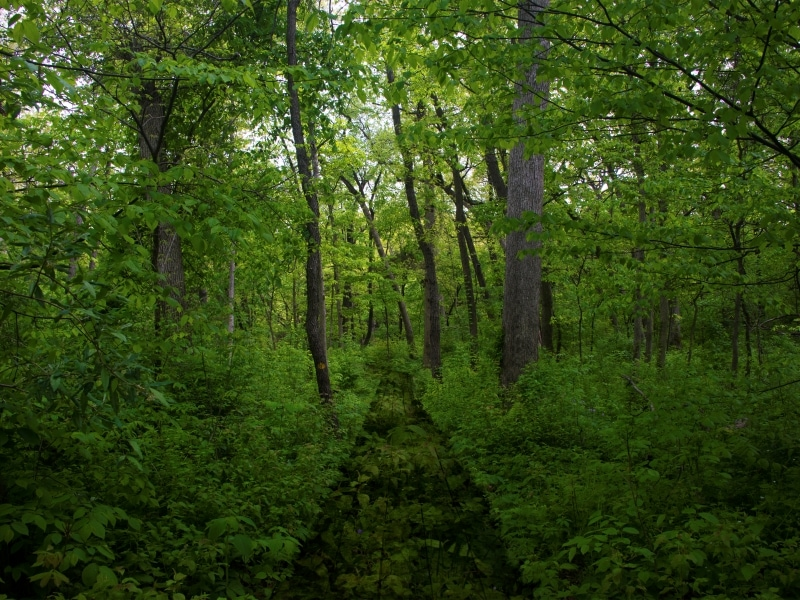 photograph of trees in a forest