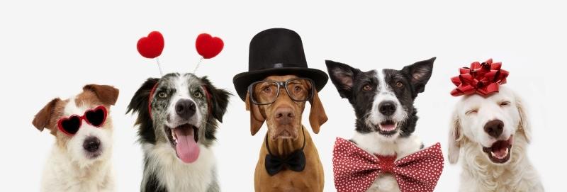 5 dogs wearing Valentine's accessories