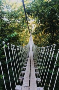 rope & wood bridge in forest